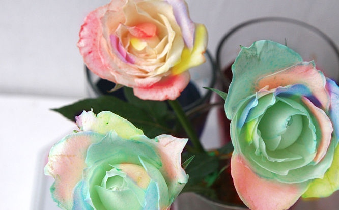 Making Rainbow Roses At Home Flowersussr
