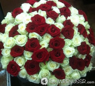 101 or 201 roses for your Russian or Ukrainian girlfriend