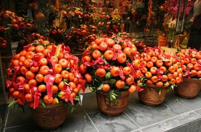Кинкан или кумкват - традиционное новогоднее растение на Востоке