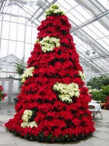 Новогоднее дерево из пуансеттий