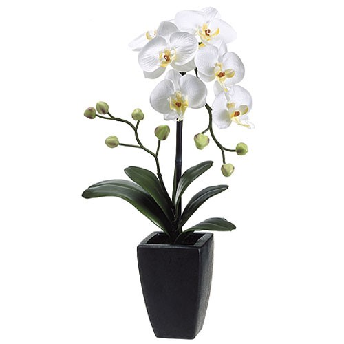 Orchid in a decorative planter