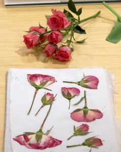 Flatting the flowers for pressed flower picture
