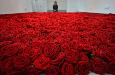 Room filled with roses
