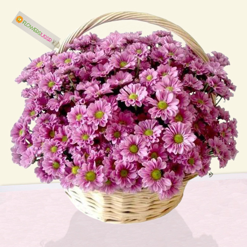 Basket arrangement with purple chrysanthemums